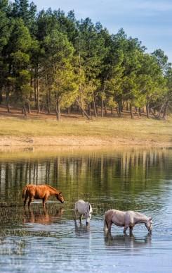 cadiz-2013-caballos-bebiendo-en-el-embalse-de-bornos