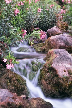 rio-majaceite-en-el-bosque-banamahoma