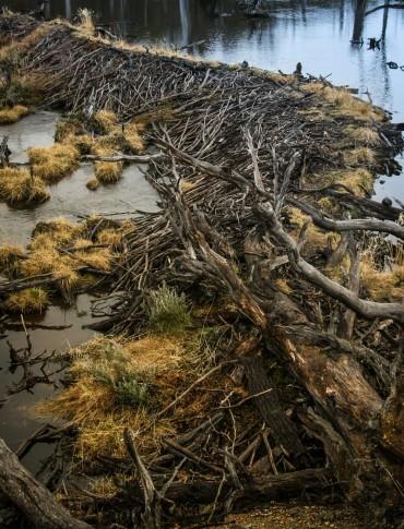ushuaia-2010-presa-natural-construida-por-los-castores
